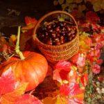 Boisseau-nature-automne-morvan-bourgogne